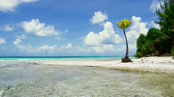 Thumbnail for Tropical Beach with Palm Trees in French Polynesia
