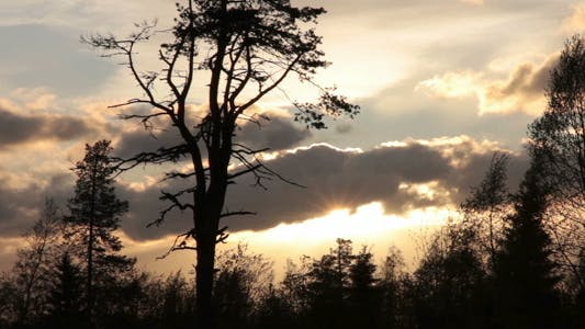 Thumbnail for Tree Silhouettes And Evening Sky