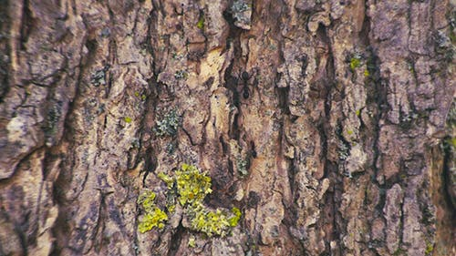 Bark and Ants