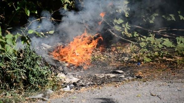 Thumbnail for Fire Near a  Green Grass