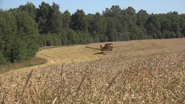 Harvesting 7
