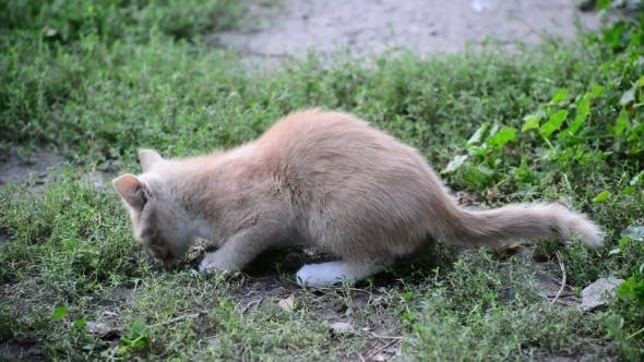 Cover Image for Hungry Stray Kitten Eats Bread