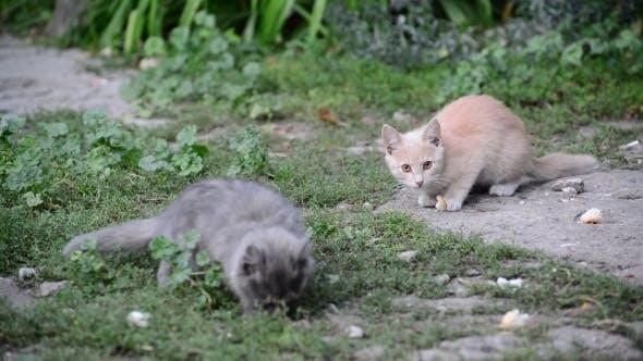 Thumbnail for Hungry Stray Kitten Eats Bread