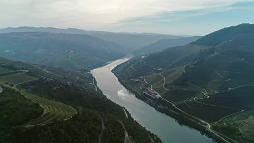 Terraced Vineyards in the Douro River Valley