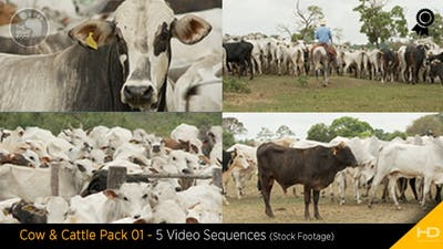 Cow & Cattle Pack 01