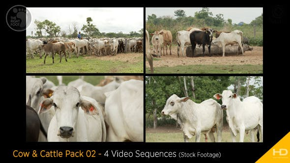 Thumbnail for Cow & Cattle Pack 02