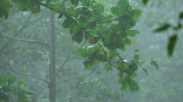 Thumbnail for Tropical Downpour