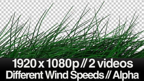 2 Realistic Grass Blowing Videos - Windy  - ALPHA