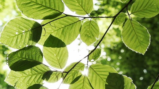 Thumbnail for Green Foliage And Sunlight