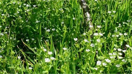 Thumbnail for Flowers 20