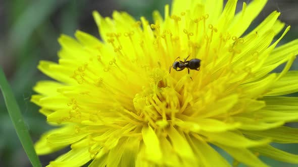 Cover Image for Ant And The Dandelion 2