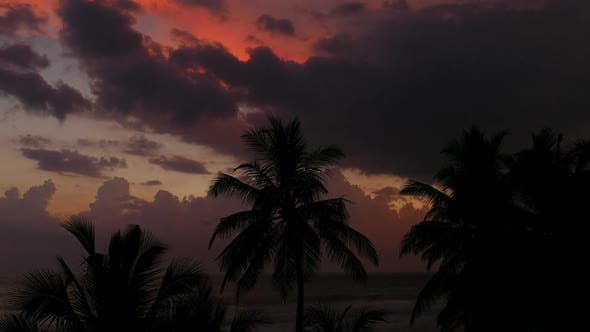 Thumbnail for Beautiful Landscape  Tropical Sea Sunset And Palm On Foreground - 1