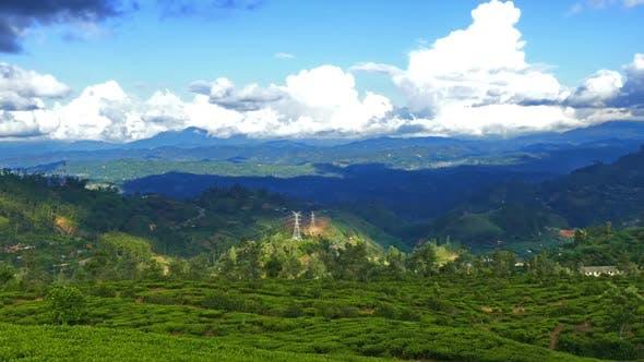 Thumbnail for Mountain Landscape  Tea Plantation