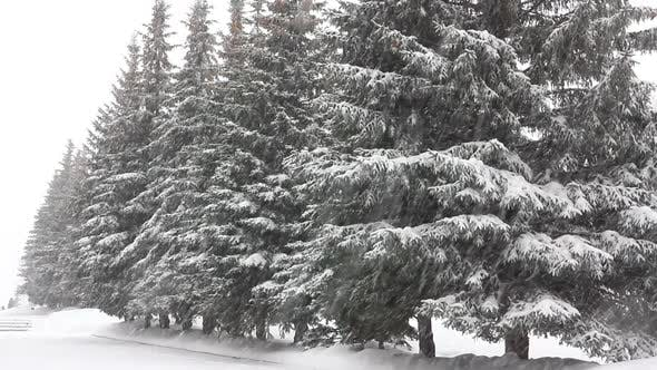Thumbnail for Snowfall In Winter Park 1