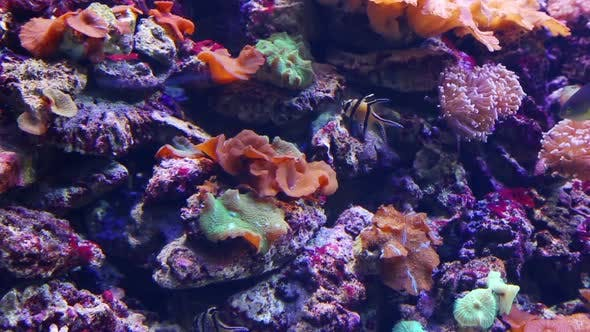 Thumbnail for Tropical Fish And Corals Underwater