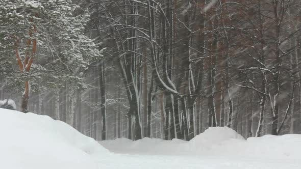 Thumbnail for Snowfall In Winter Forest 6