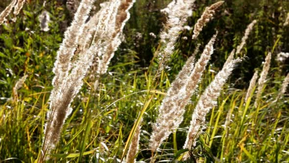 Cover Image for Stems Of Dry Grass 2