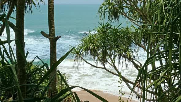 Thumbnail for View Of The Ocean Beach Through Coastal Thickets 1