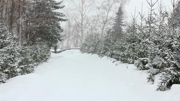 Thumbnail for Snowfall In Winter Park 3