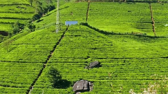 Thumbnail for Panorama Of Mountain Tea Plantation In Sri Lanka 1