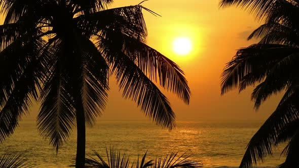 Thumbnail for Beautiful Landscape  Tropical Sea Sunset And Palm On Foreground -  Zoom