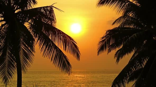 Cover Image for Beautiful Landscape  Tropical Sea Sunset And Palm On Foreground - 3