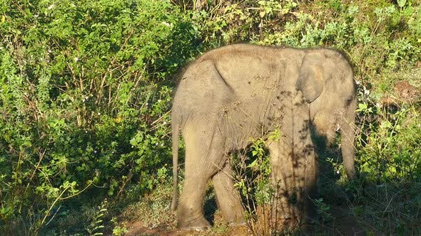 Thumbnail for Small Fun Indian Baby Elephant In Jungle 1