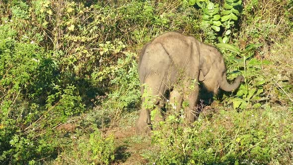 Cover Image for Small Fun Indian Baby Elephant In Jungle 2