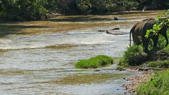 Thumbnail for Elephants In The River - Sri Lanka 8