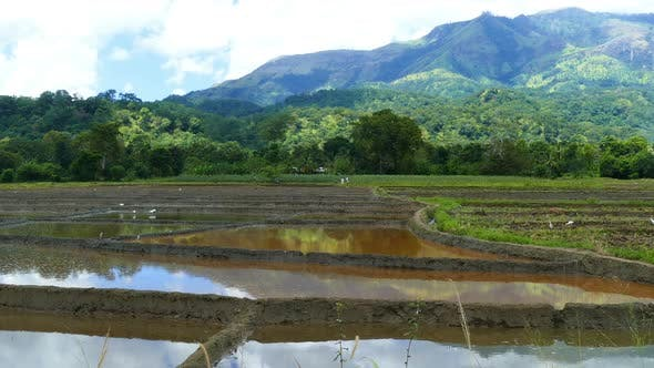 Thumbnail for Mountain Landscape  Rice Plantation In Sri Lanka 2