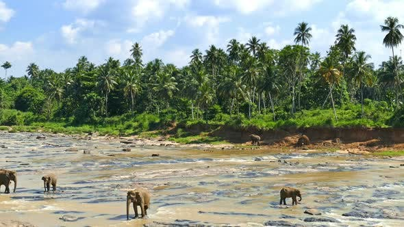 Thumbnail for Elephants In The River - Sri Lanka 18