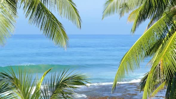 Thumbnail for Beautiful Blue Sea Landscape  Palm Leaves On Foreground 3