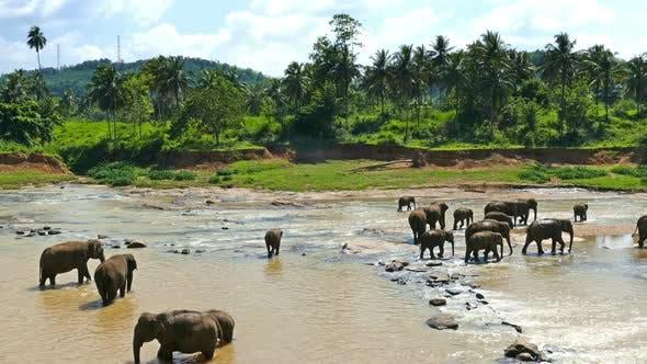 Thumbnail for Elephants In The River - Sri Lanka 6