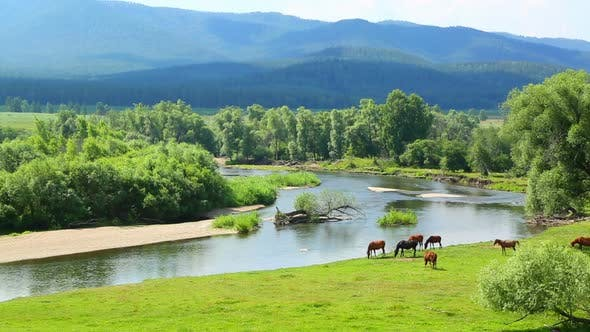 Cover Image for Summer Landscape  River Between Mountains And Grazing Horses 1