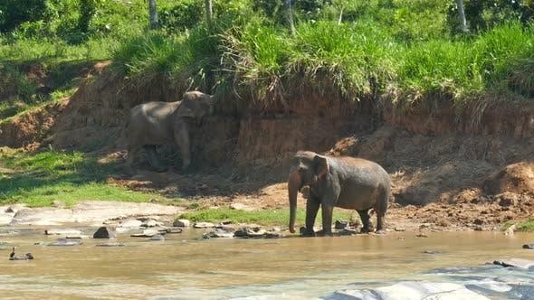 Thumbnail for Elephants In The River - Sri Lanka 15