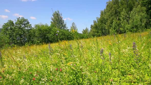 Thumbnail for Landscape  Summer Meadow And Butterflies 2