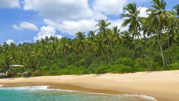Thumbnail for Beautiful Landscape  Sea Waves On Tropical Beach And Coconut Palms 5