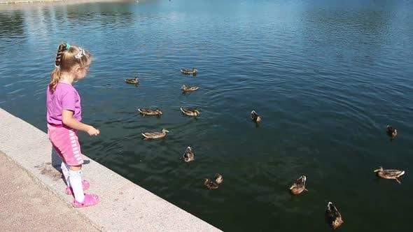 Thumbnail for Little Girl Feeding Ducks In Park 1