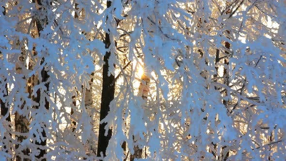 Thumbnail for Winter Frozen Birch Woods And Sun Rising