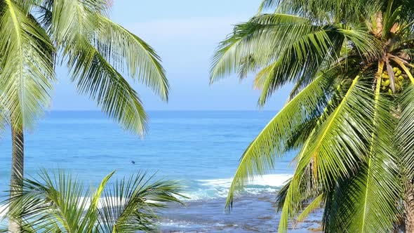 Thumbnail for Beautiful Blue Sea Landscape  Palm Leaves On Foreground 2