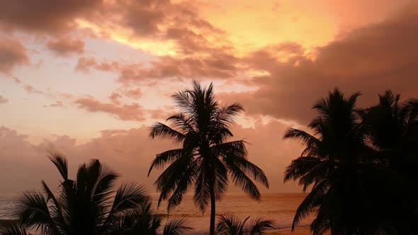 Thumbnail for Beautiful Landscape  Tropical Sea Sunset And Palm On Foreground