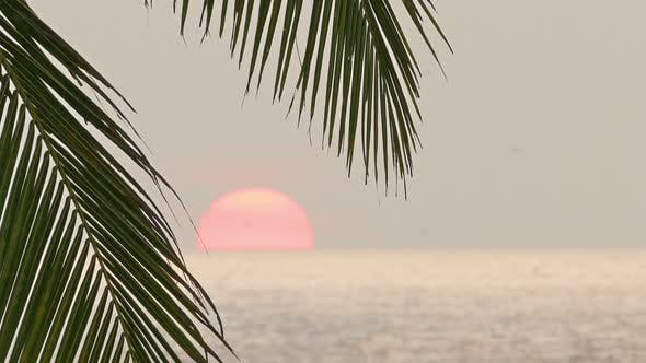 Thumbnail for Beautiful Sea Sunset And Palm Leaf On Foreground 1