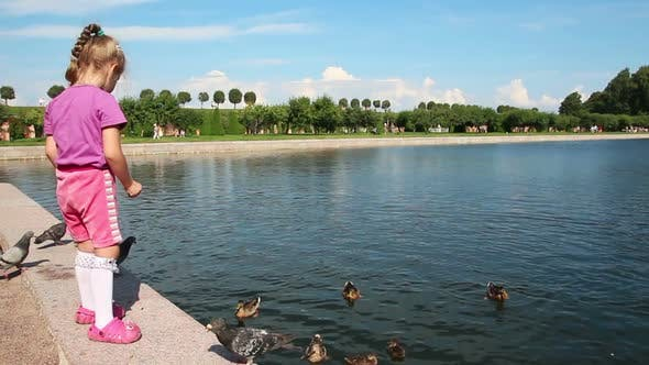 Thumbnail for Little Girl Feeding Ducks In Park 2