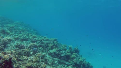 Underwater Landscape  Fish Swim Among Corals In The Red Sea - Egypt 1