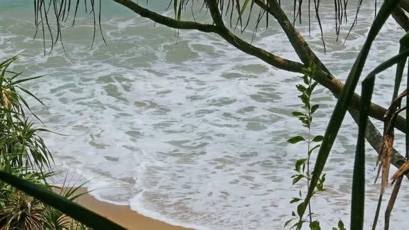 Thumbnail for View Of The Ocean Beach Through Coastal Thickets 2