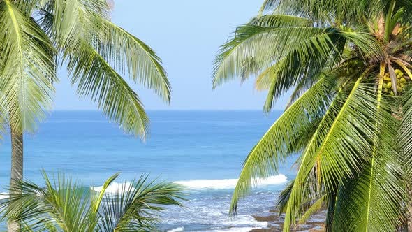 Thumbnail for Beautiful Blue Sea Landscape  Palm Leaves On Foreground 5