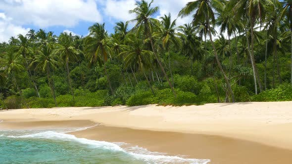 Beautiful Landscape Sea Waves On Tropical Beach And Coconut Palms 6