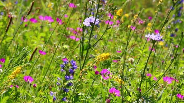 Thumbnail for Flowers On Summer Meadow 1