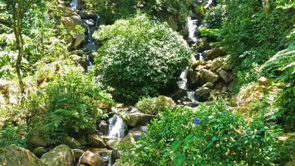 Thumbnail for Forest Waterfall In Sri Lanka 1