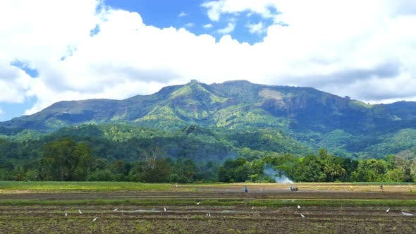 Thumbnail for Mountain Landscape  Rice Plantation In Sri Lanka 3